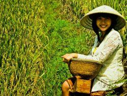 Gawat, 500.000 Petani di Indonesia Tinggalkan Sektor Pertanian Setiap Tahunnya.