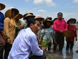 Jokowi Geram Pada Insinyur Pertanian di Indonesia