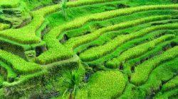 lahan-pertanian1
