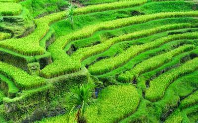 Lahan Pertanian di Jawa Barat dipertahankan