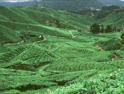 Pembangunan Pertanian, Memahami dan Melaksanakannya