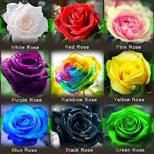 Warna Bunga Mawar Dan Maknanya Mediatani