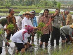Gerakan Tanam Padi di Lampung akan dibuka oleh Menteri Pertanian