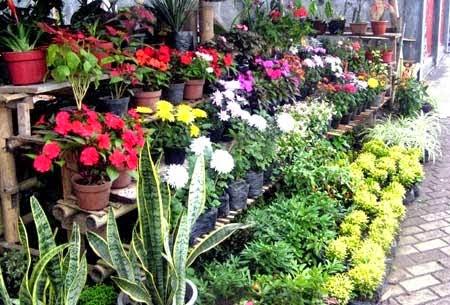 Bunga Bunga Indah Yang Mudah Tumbuh Di Rumahmediatani Mediatani