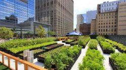 New-York-Riverpark-Urban-Farm1