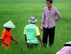 Apakah Jokowi Berpihak Kepada Petani