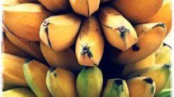 pisangkepok1