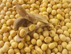 Tempe Tidak Hanya dari Kacang Kedelai, Bahan-bahan Ini juga Bisa