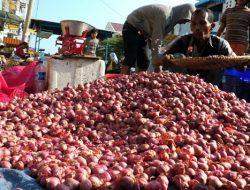 Naiknya Harga Bawang Merah Tidak Untungkan Petani