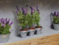 Cara Menanam Bunga Lavender Di Rumah