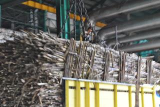 Batang Tebu diangkut Ke Pabrik Pembuatan Gula