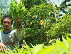 Pertanian Organik Solusi Kesehatan Lingkungan
