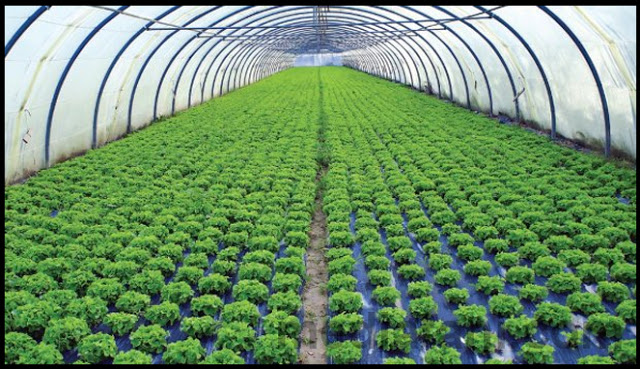 sentra agribisnis agroindustri
