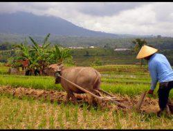 Nilai Tukar Petani Di Jawa Timur Meningkat