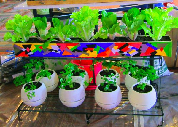 5 Usaha Pertanian Dan Peternakan Ini Bisa Beri Untung Besar Mediatani