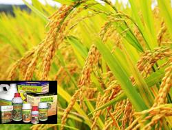 Cara Sukses Memulai Bisnis Obat Pertanian di Pedesaan