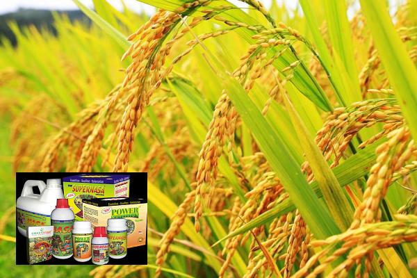 Cara Sukses Memulai Bisnis Obat Pertanian Di Pedesaan Mediatani