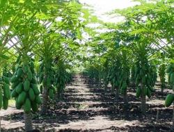 Kisah Petani Sukses Dari Nol yang Jadi Pengusaha Kaya Raya