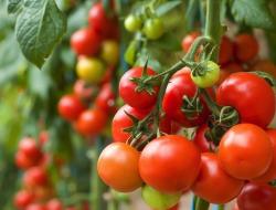 Peluang Usaha Pertanian Hidroponik Untung Puluhan Juta Per Bulan