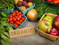 Petani Organik Sukses, Modal Nekat Bisa Panen Tiap Hari