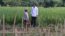 jokowi bersama petani