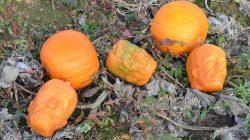 Frankenstein-pumpkins 3