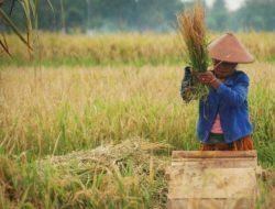 Tingkat Kesejahteraan Rendah Jadi Pemicu Krisis Regenerasi Petani