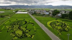 japanese-rice-paddy-art