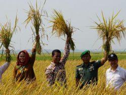 Pertanian Organik Wujudkan Swasembada Pangan