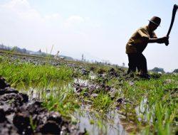 Petani Bandung Barat Banyak Yang Tak Punya Lahan