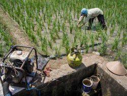 Inspiratif, Petani Muda Lulusan SD Ini Dapat Penghargaan dari FAO