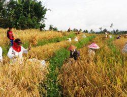Kebijakan Pemerintah Dinilai Justru Mematikan Petani, Investasi Pertanian Menurun
