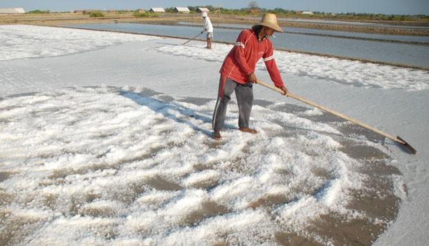 Petani garam. ANTARA/Saiful Bahri