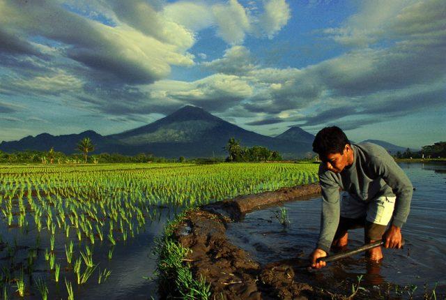 Hidup Di Desa Kerja Onlin Di Cap Warga Sebagai Orang Pemalas