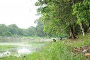 Arboretum sebagai kawasan ekowisata, penelitian, pendidikan dan pengembangan RTH