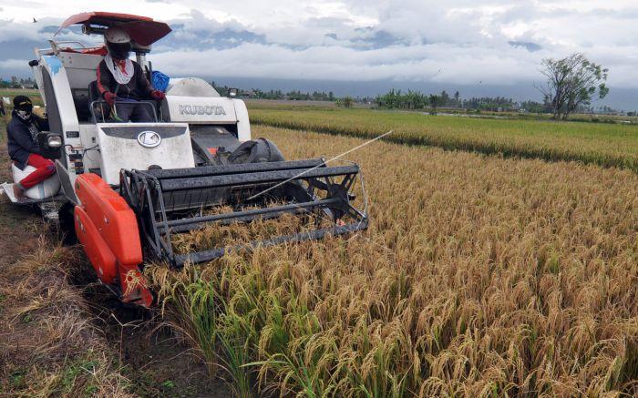 Mesin pemanen padi digunakan untuk memanen padi milik petani di Desa Sidera, Kabupaten Sigi, Sulawesi Tengah, Senin (20/11). Pemerintah melalui Kementerian Pertanian mendorong petani di Indonesia untuk memanfaatkan dan beralih ke teknologi pertanian modern guna meningkatkan produksi dan pendapatan petani. ANTARA FOTO/Mohamad Hamzah/ama/17.
