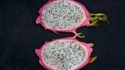 buah naga 1