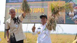inovasi-pertanian-padi-jarwo-super