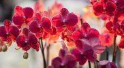 cara menanam bunga anggrek bulan, cara menanam bunga anggrek agar cepat berbunga, cara menanam bunga anggrek dengan sabut kelapa, cara menanam bunga anggrek di pot, cara menanam bunga anggrek yang benar, cara menanam bunga anggrek vanda, cara menanam bunga anggrek bulan di pot, cara menanam bunga anggrek yg baik dan benar, cara menanam bunga anggrek yang mudah, cara menanam bunga anggrek dlm pot, cara menanam bunga anggrek, cara menanam bunga anggrek dengan arang, cara menanam bunga anggrek yang baik, cara menanam bunga anggrek di pohon, cara menanam bunga anggrek tanah, cara menanam bunga anggrek yang baik dan benar, cara menanam bunga anggrek di tanah, cara menanam bunga anggrek di pot gantung, cara menanam bunga anggrek di sabut kelapa, cara menanam bunga anggrek dan perawatannya, cara mudah menanam bunga anggrek, cara menanam dan merawat bunga anggrek, cara menanam dan memelihara bunga anggrek, cara menanam bunga anggrek putih, cara menanam bunga anggrek dengan pakis,