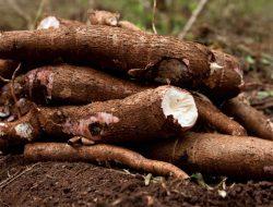 Hati-Hati ! Inilah Tumbuhan Mematikan Yang Tumbuh Di Indonesia