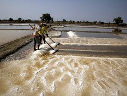 Produksi Garam Belum Penuhi Kebutuhan Nasional