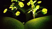 Glowing Plant By MIT