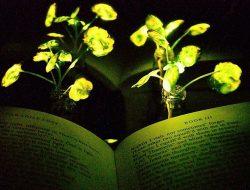 Menakjubkan! Ilmuwan Berhasil Buat Tanaman Bercahaya yang Bisa Menggantikan Lampu