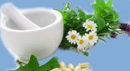 tanaman obat herbal diabetes