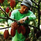 petani kakao [foto: agricoolture.ph]