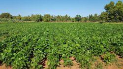 Cara Diversifikasi Pertanian yang Wajib Anda Ketahui