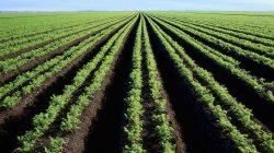 Diversifikasi Pertanian Beserta Caranya