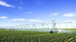 Inilah 3 Kontribusi Penting Teknologi Industri Pertanian di Bidang Peterna