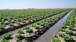 Kontribusi Penting Teknologi Industri Pertanian Terhadap Bidang Peternakan