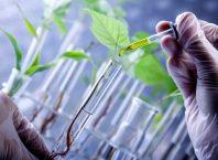 Mengenal Bioteknologi Pertanian dari Produk yang Dihasilkan